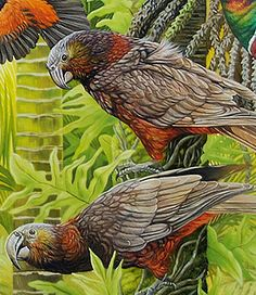 Art by the Sea art gallery specializes in fine NZ arts and crafts, with a huge range of original, fine New Zealand and Maori arts and crafts. Bird Artists, Maori Designs, New Zealand Art, Nz Art, Maori Art, Rare Birds, Bird Illustration, Beautiful Birds, Contemporary Artists