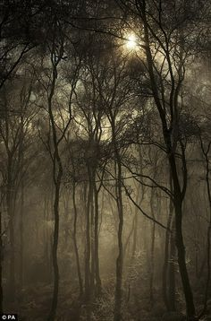Photograph of Rawhead woods in Cheshire by Peter Clark.