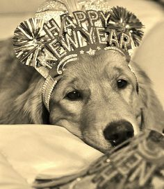 80 Best Holidays Are More Golden With A Dog Images Cute Dogs