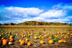 This list of 11 best pumpkin patches in California should be your start to one amazing September/October!