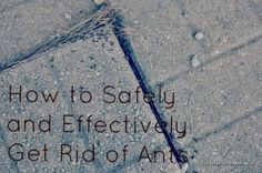 Best 25 Ant Removal Ideas On Pinterest Ants Repellant
