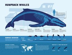Humpback Whales, by Meredith Ross