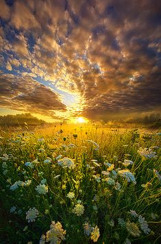 """Phil Koch - """"A Spiritual Calling"""" Wisconsin Horizons by Phil Koch. Horizons is a 5 year photographic journey turning landscapes into portraits of nature focusing on life, light and an abundance of color presented in a vertical format. Beautiful Sunset, Beautiful World, Beautiful Images, Beautiful Wife, Landscape Photography, Nature Photography, Photography Tips, Photography Courses, The Ancient Magus Bride"""