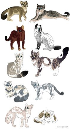 All! Gorseleaf,Thicketbush,Redtiger,Swiftleg, Froststorm,Darktail,Spottedcloud,Skypaw, Creampelt, and Brightfeather!