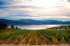 kelowna vineyard british columbia canada