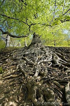 A lot of great analogies in this picture. tree roots by angela daley