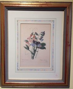 Rare Limited Ed  Print Natural History Museum Fairest Flowers Redoute Sweet Pea
