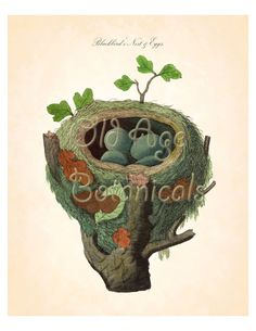 BLACKBIRD Bird Nest Print Blue Eggs Dark Spots by OldAgeBotanicals
