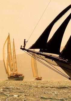 Golden sails  Marynistyka.org, Marynistyka.pl