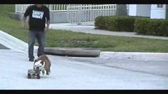 tilman the skateboarding dog - YouTube