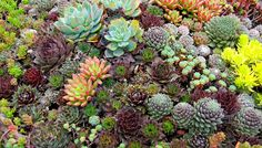 "Debra Lee Baldwin's bestselling books about succulents launched the current succulent craze, earning her the title ""Queen of the Succulents."" As one of our most popular presenters, Baldwin's missio…"