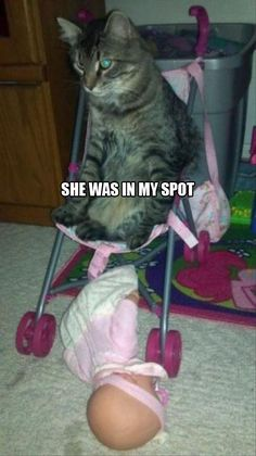 I could see my cat doing this~joya