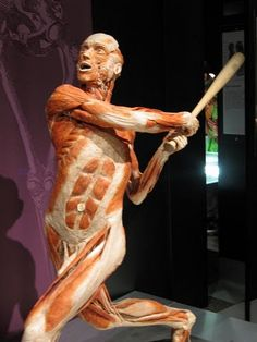 Man Anatomy, Body Anatomy, Nice Body, Bb, Statue, Awesome, Sculptures, Sculpture