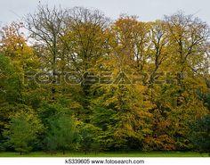 Colección de imágen - haya, árboles, y, conífero, árboles, en, otoño, con…