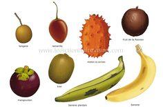 Fruits tropicaux : fruits variés, généralement d'origine exotique, plus ou moins commercialisés dans les pays occidentaux.
