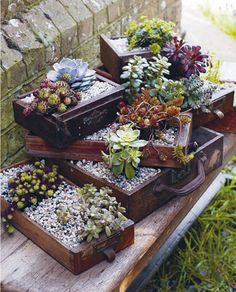 Succulent garden in vintage suitcases and drawers