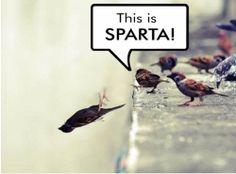 Niedobre ptaszki