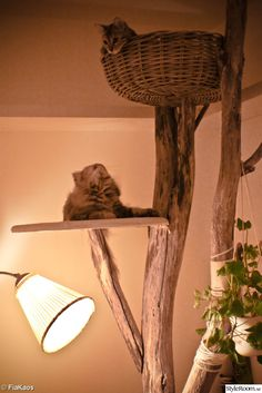 katträd,tvåarmad lampa,hemmabygge