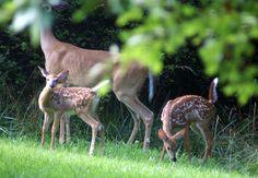backyard sanctuaries | Certifying Your Yard or Garden as a Wildlife Habitat
