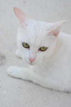 NOLA - Gato adoptado - AsoKa el Grande