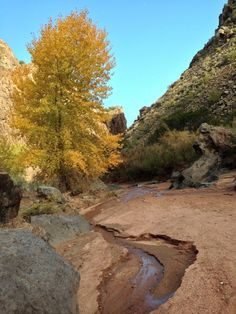 Day-hike in Diablo Canyon: Golden leaved tree, water, gravel and blue sky in a New Mexico canyon.
