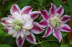 10 great plants for small gardens.