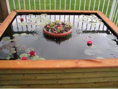 Gartenteich Wasserpflanzen Seerosen