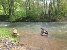 "Wheelchairs for Handicapped Dogs | Hand Built Quality by Ruff Rollin | ""Ryno"" Chocolate Lab 