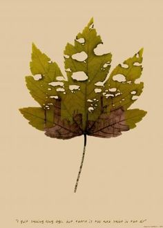 Confessions of leaves