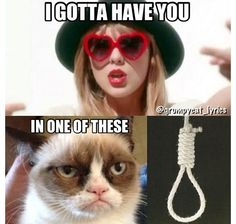 More Taylor Swift hating from Grumpy Cat, what do people have against her?, Taylor Swift hating from Grumpy Cat, what do people have against her? Grumpy Cat Quotes, Funny Grumpy Cat Memes, Cat Jokes, Funny Cats, Cute Animal Memes, Cute Funny Animals, Funny Animal Pictures, Cute Cats, Meme Comics