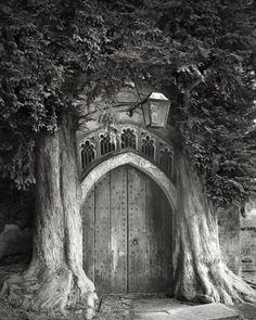 drzewa (6)