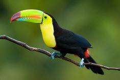 Google Image Result for http://www.toucansworld.com/uploads/3/0/1/3/3013606/3703068_orig.jpg%3F374