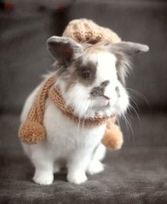 Bunny with #knit scarf and hat    @Lindsey Grande Gardner if you get a bunny, I will totally knit this for it!