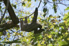 Les paresseux et autres merveilles de l'hôtel Parador au Costa Rica. - annima.fr