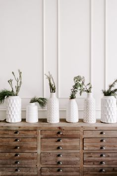 5 Incredibly Easy Houseplants for Beginners