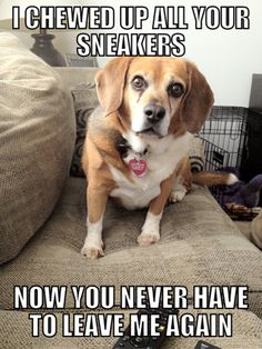funny animal captions
