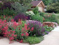 Beste Xeriscape Landschaftsgestaltung Colorado Inspirations 292 - front yard landscaping ideas with rocks Drought Tolerant Garden, Garden Planning, Outdoor Gardens, Yard Landscaping, Garden Design, Xeriscape Landscaping, Desert Landscaping, Cottage Garden, Backyard