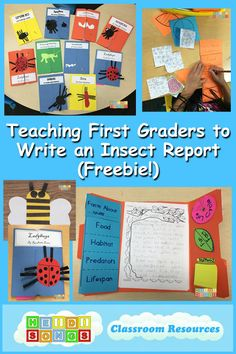 Teaching First Graders to Write an Insect Report (Freebie!)