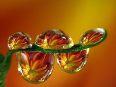 Reflections in water drops