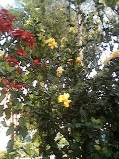Flores rojas y amarillas