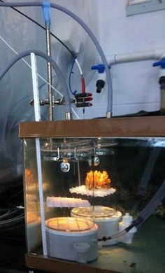 Parental experience may help coral offspring survive climate change - http://scienceblog.com/79662/parental-experience-coral-offspring-survive-climate-change/