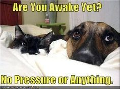 """""""No pressure."""" That daily wake-up stare is priceless! Share if you agree!"""