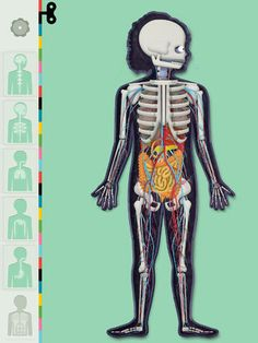 The Human Body App by Tinybop: Explore a working model of the body. Every part is animated and interactive.