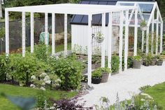Kasvimaa likes pergola (? Garden Trellis, Garden Beds, Outdoor Plants, Outdoor Gardens, Townhouse Garden, Hillside Garden, Backyard Sheds, Greenhouse Gardening, Garden Structures