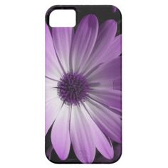 Gorgeous Purple Daisy Flower iPhone 5 Case