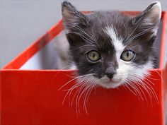 Kitten (by Dragan*)