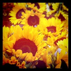 Sunflowers - bought some at the farm for the kitchen table