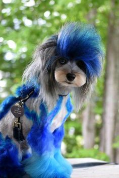 Getting Started With OPAWZ Dog Hair Dye Dog Hair Dye, Dog Dye, Dyed Hair, Dog Grooming Styles, Pet Grooming, Funny Animals, Cute Animals, Creative Grooming, Silly Dogs