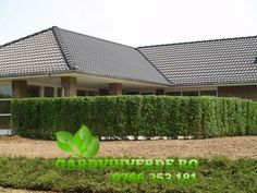 Plant hedge - the solution to your problems If you own a corner lot, you are likely to have problems Outdoor Sofa, Outdoor Furniture, Outdoor Decor, Modern Kitchen Interiors, Living Fence, Modern Fence, Hedges, Decor Styles, Garden Design