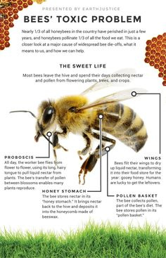 We May Have Figured Out What's Killing The Bees. Are We Brave Enough To Save Them?